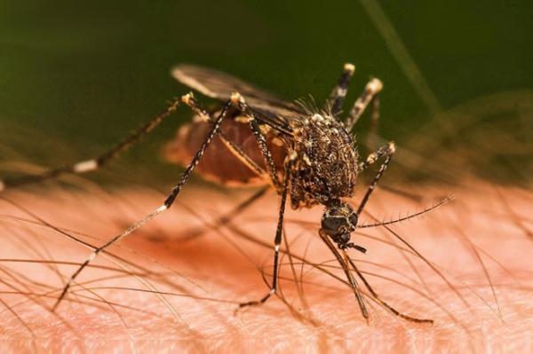 Укусы комаров у детей чем лечить